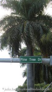 Pine Tree Drive