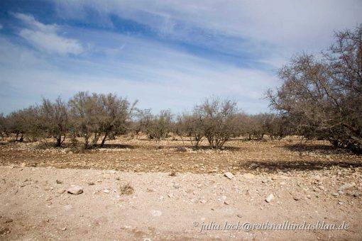 Arganbaum Souss-Ebene